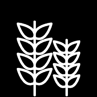 espigas-seccion-4